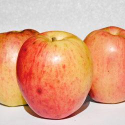 Des pommes à la récréation