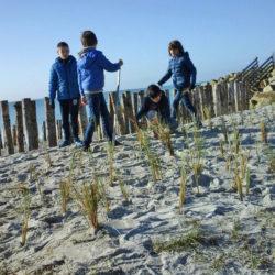 Plantation d'oyat par les enfants, pour protéger la dune